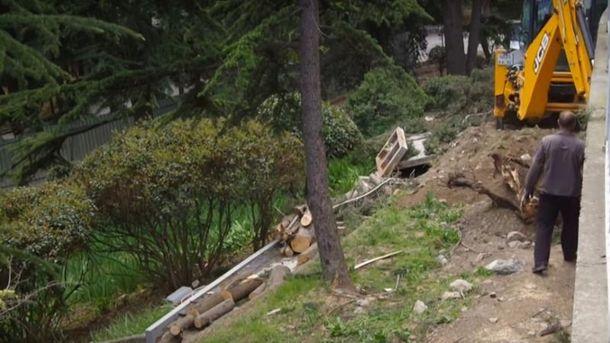 Вырубка деревьев в Артеке