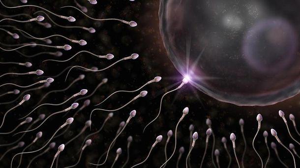 Сперматозоїди можуть лікувати рак
