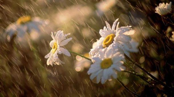 Погода 6 травня: дощі очікуються лише в деяких містах Західної України