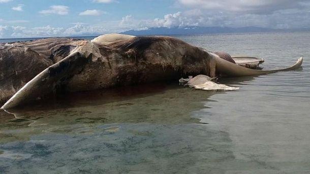 Неизвестное существо может быть китом