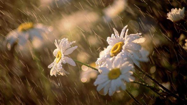 Погода на 16 травня: в Україну повертаються дощі