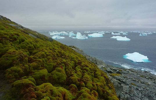В Антарктиде появляются растения вследствие глобального потепления