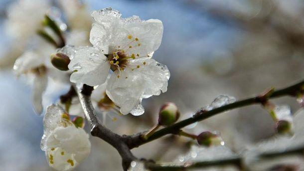 Погода в Украине: ожидаются заморозки