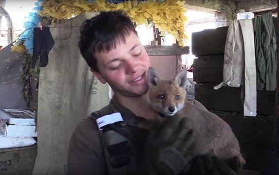 Разом з бійцями АТО живе лисиця Аліса