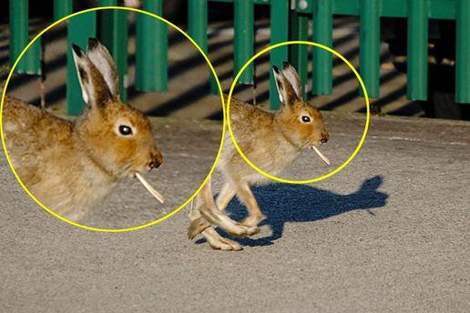 Заяц с сигаретой