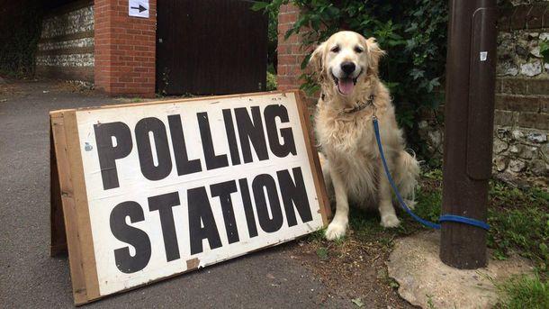 Собака-участник акции #dogsatpollingstations