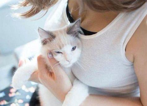 Фотограф создал альбом с изображениями котиков и груди