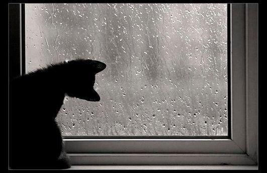 Погода в Україні  стане прохолодною та дощовою