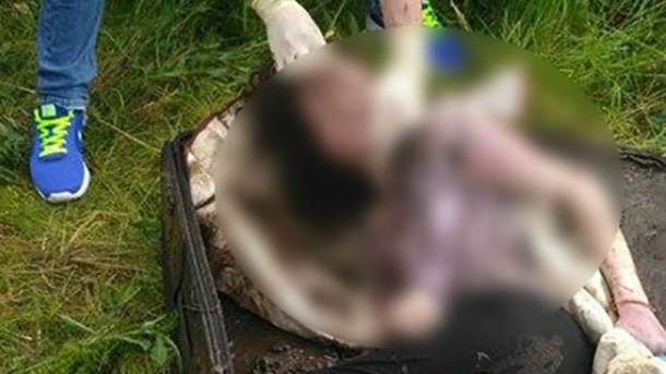 Убийство студентки на Прикарпатье