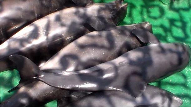 Погибшие дельфины
