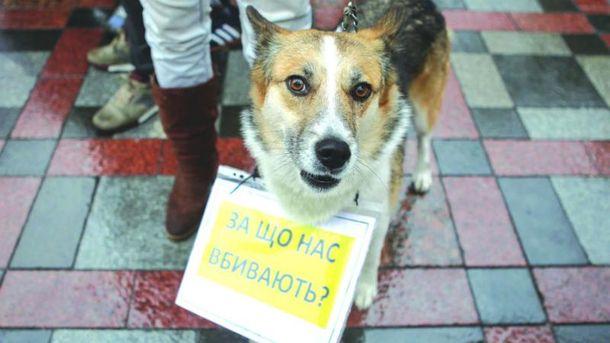 Рада ужесточила ответственность за жестокое обращение с животными