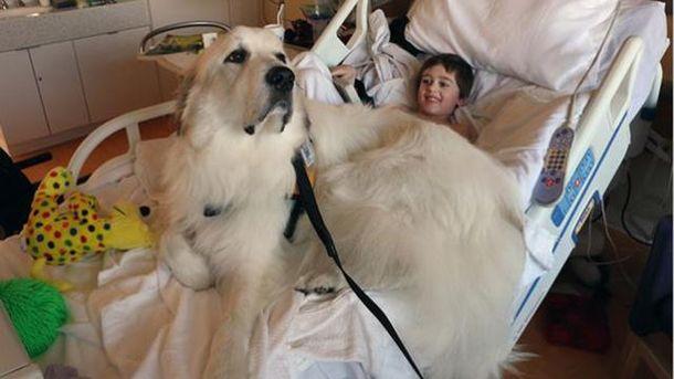Собаки помогают больным