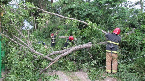 Ураган свирепствовал в Черновицкой области