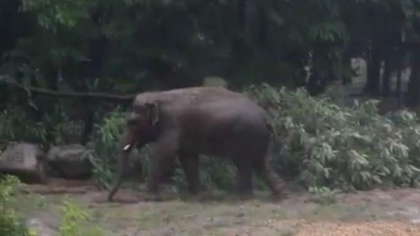 Слон в киевском зоопарке