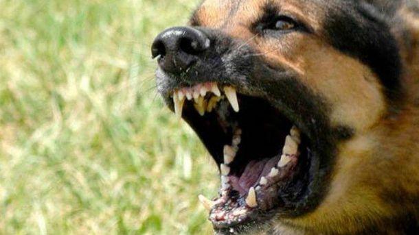 Собака напала на правоохоронців