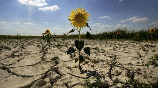 Засуха в Крыму