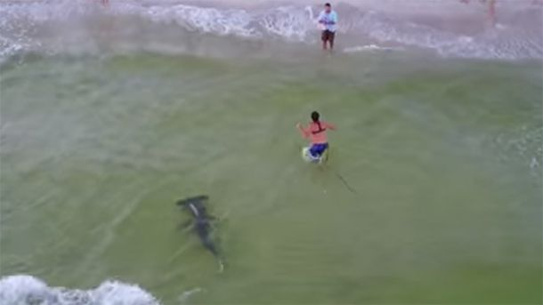 Мужчина поймал двухметровую рыбу-молот