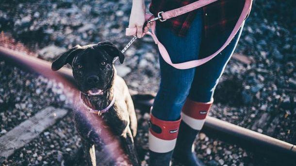 Возьмите собаку из приюта
