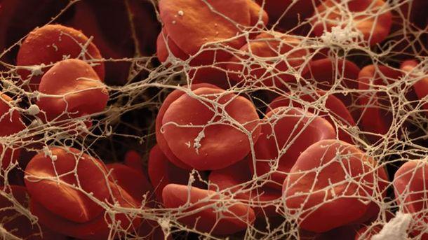 Кров під мікроскопом