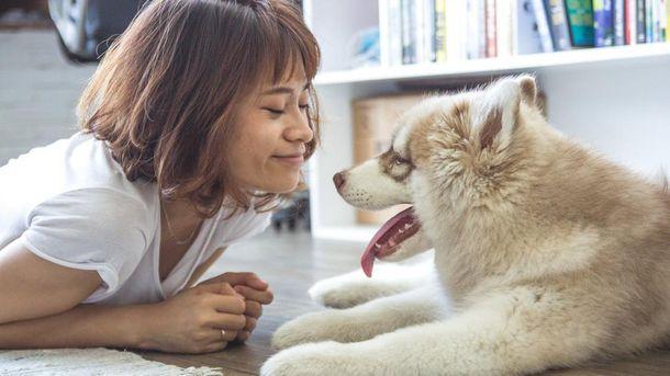 Вчені дослідили, чому собаки дружелюбно ставляться до людей