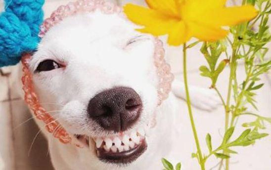 Собака Євро
