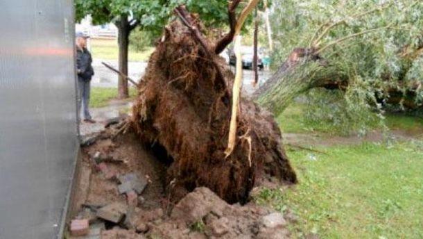 Сильные ураганы всколыхнули часть Польши: деревья вырывало скорнями