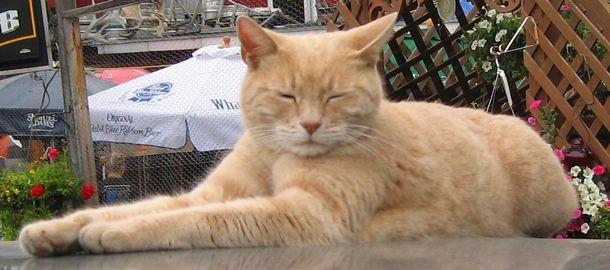 Кіт-мер з Аляски