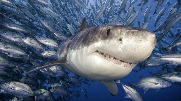 Украинец рассказал, как спас туристку от белой акулы в Египте