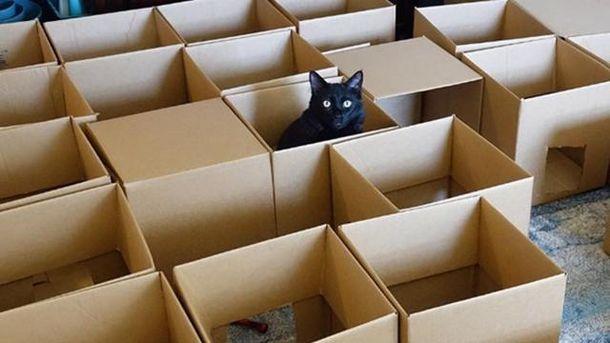 Мужчина создал лабиринт для котов