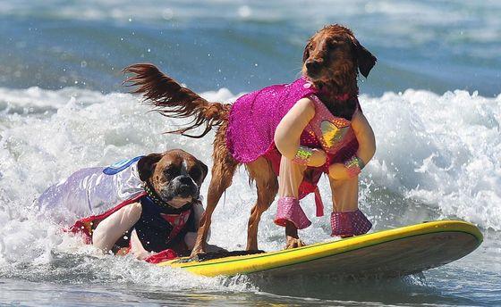 Серфинг для собак