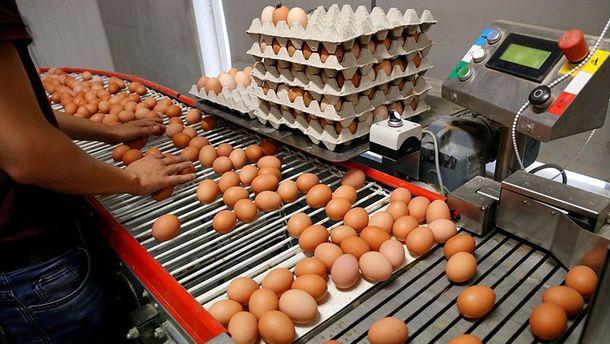 У Європу завезли велику партію отруйних яєць