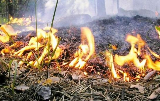 Спасатели предупреждают о чрезвычайной пожарной опасности в 10 регионах Украины