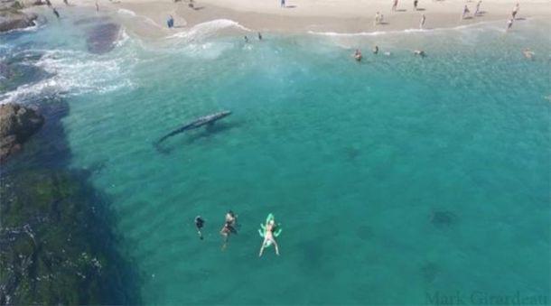 Шестиметровый кит плавал у берега популярного курорта
