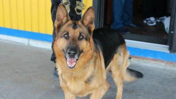 Рекордную партию наркотиков обнаружил пес пограничников
