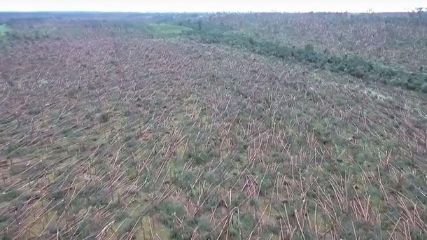 Поваленные деревья в Польше в результате непогоды