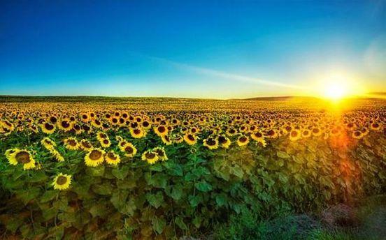 Погода на 26 серпня: у всій Україні буде спекотно
