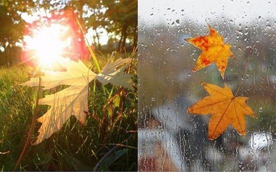 Погода на 1 вересня: перший день осені буде теплим та з дощами