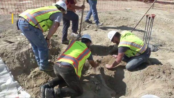 Будівельники виявили рештки динозавра