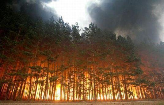 Лісові пожежі в США та Канаді