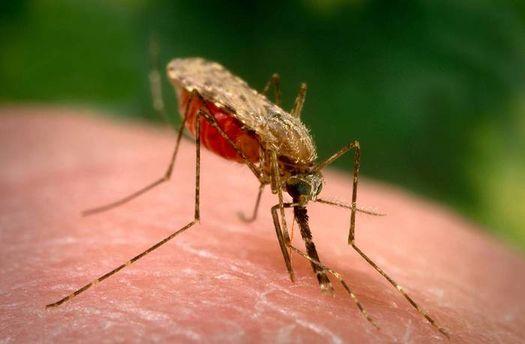 В Італії через малярію померла 4-річна дитина