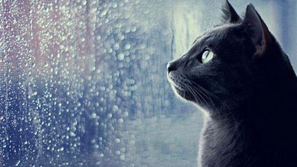 Погода на 7 вересня: на заході литимуть дощі, на півдні – до +27