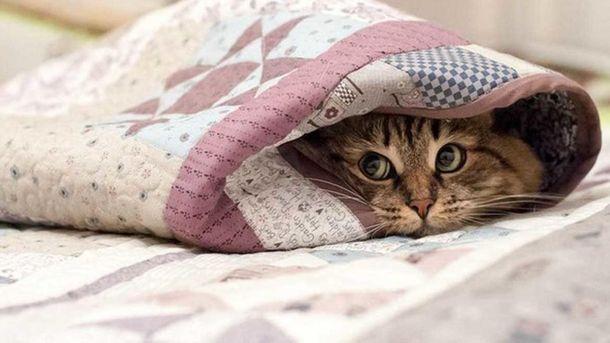 В ночь на 7 сентября в Киеве температура опустится до +7 градусов