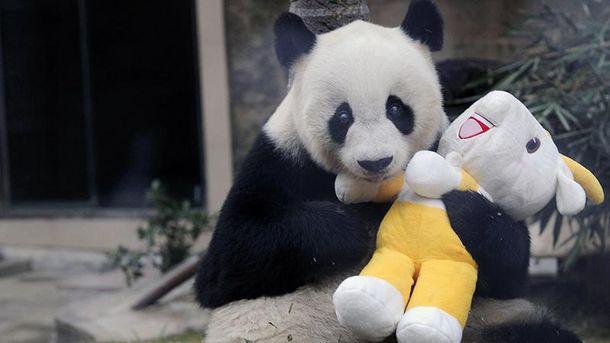 Померла найстаріша панда Баси