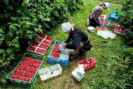 У Польщі вводять податок на сезонних робітників з України
