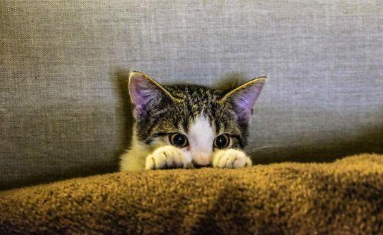 Коти можуть заразити людину