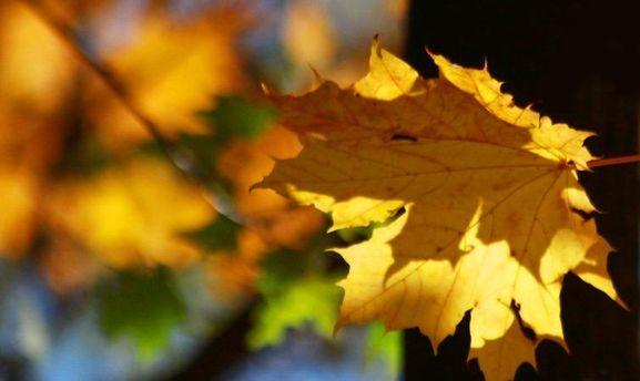 Жаркая осень: Киев установил новый температурный рекорд