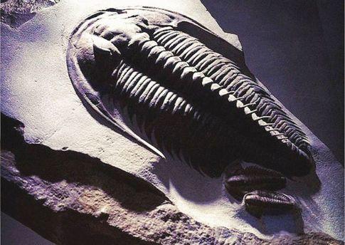 Учёные создали 3D-модель старинного животного