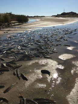УЗапорізькій області сталася екологічна катастрофа