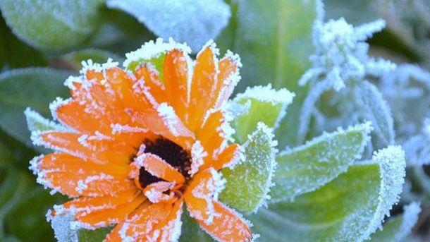 ВУкраїні починаються заморозки