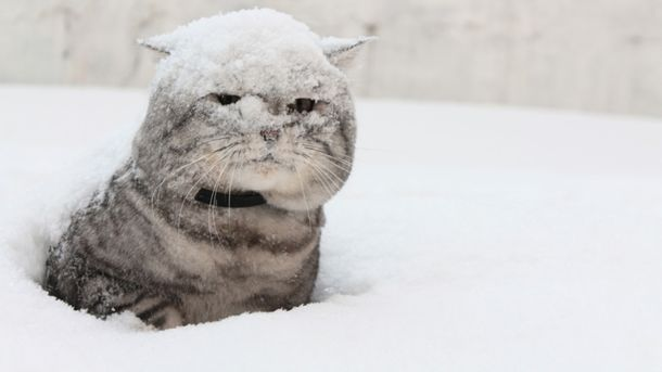 Синоптики попередили українців про перший сніг